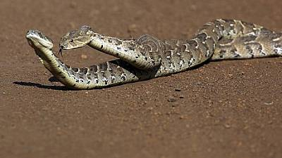 A snake swallowed Sh10 million - Nigerian clerk tells officials