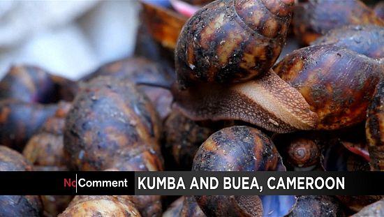 喀麦隆企业家变成蜗牛清洗成一个有利可图的生意[无可奉告]