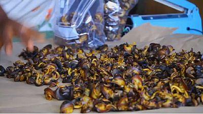 Cameroun : le business florissant des escargots séchés