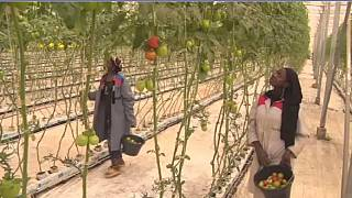 Mali : la technologie pour booster l'agriculture et lutter contre le changement climatique