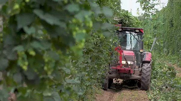 السياسة الزراعية الأوروبية..تحديات خفض الإعانات