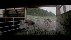 Фермерам урежут ассигнования. Орбан о миграционных угрозах