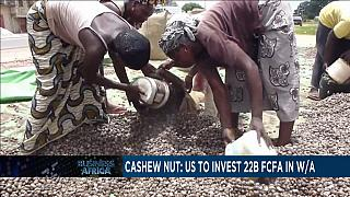 US pledges to support cashew nut industry [Business Africa]