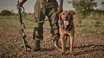 Kenyan rangers deploy anti-poaching dogs