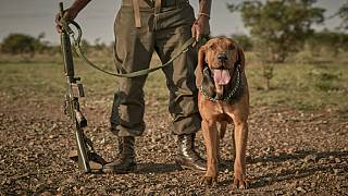 Kenyan rangers employ anti-poaching dogs to track poachers