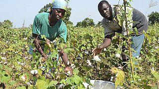 Bénin : les dangers des pratiques monopolistiques dans le secteur du coton