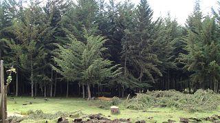 Kenya imposes ban on logging for 90 days