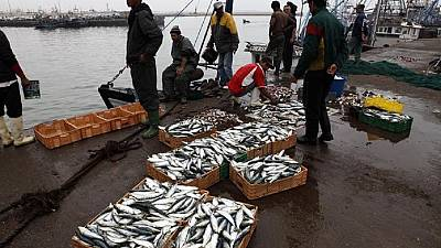 Court rules that Morocco-EU fishing deal must not extend to Western Sahara