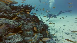 Okinawa'da dalış keyfi