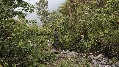 RDC : 18 travailleurs du parc Kahuzi-Biega enlevés par des miliciens