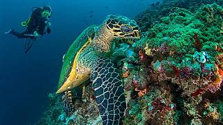 Seychelles creates new marine protected area in the Indian Ocean