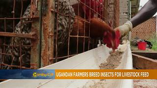 Ugandan farmers urged to use insects as livestock feed [The Morning Call]