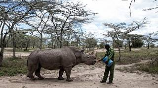 World's last male northern white rhino, Sudan, dies in Kenyan conservancy