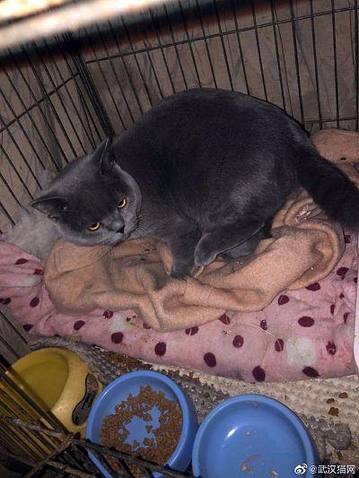 A cat rescued by Wuhancat Animal Rescue Center volunteers in Wuhan, on lockdown since Jan. 23.