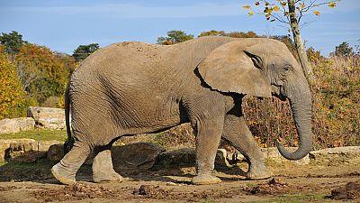 Afrique : plus de la moitié de mammifères et oiseaux pourrait disparaître à l'horizon 2100 (chercheurs)