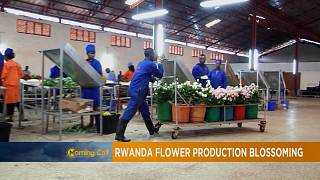 Rwanda's blossoming flowers [The Morning Call]