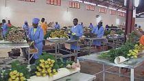 Rwanda : développer la production de fleurs