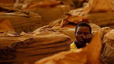 Zimbabwe : le travail du tabac empoisonne les enfants (HRW)