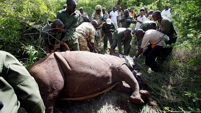 Kenya marks rhinos in conservation drive