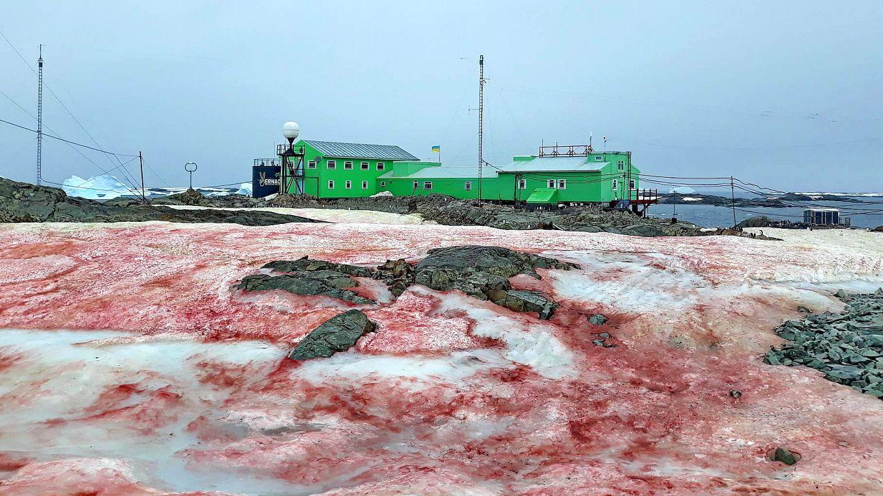 The ice around Ukraine's Vernadsky Research Base, located on Galindez Islan
