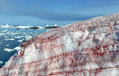 The red streaks are actually a type of red-pigmented algae that hides in snowfields and mountains worldwide.