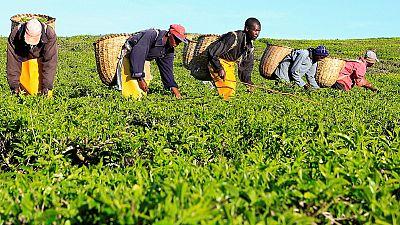 Kenya : croissance de 5, 5 % attendue en 2018