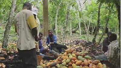 Cacao : la Côte d'Ivoire veut offrir son expertise au Congo (médias)