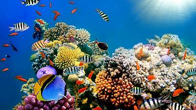 Australia to provide $ 500 million to restore and protect Great Barrier Reef