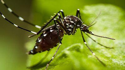 Ghana : des moustiques « intelligents » qui résistent aux insecticides