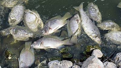 Bénin : mort mystérieuse des milliers de poissons