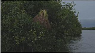 Bénin : une divinité vaudoue appelée au secours de la mangrove