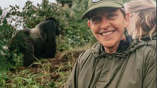Ellen DeGeneres shares gorilla experience, authorities note population recovery