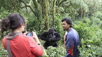 RDC: Le parc des Virunga restera fermé jusqu'à l'an prochain