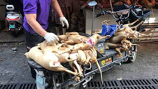 Outcry over China's controversial dog meat festival
