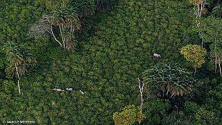 Exploitation illégale de bois en RDC : une ONG demande à la France d'agir