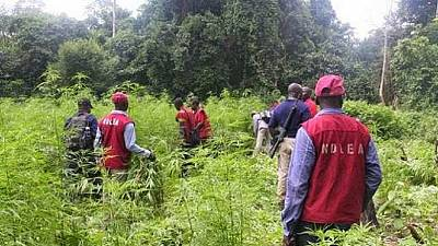 Lutte contre la drogue : le Nigeria met l'accent sur la sensibilisation