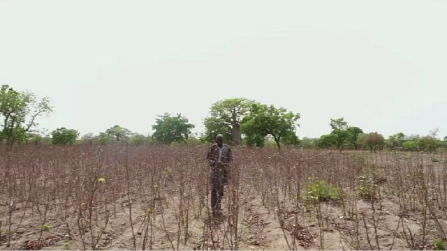 L'inquiétude des producteurs de coton au Burkina Faso