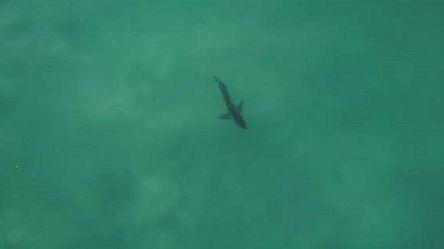 Un grand requin blanc s'invite à une compétition de surf en Afrique du Sud [No Comment]
