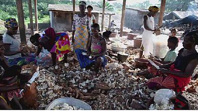 Afrique : une maladie du manioc inquiète les chercheurs
