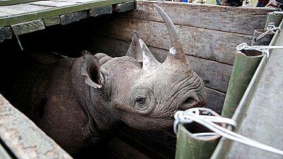 8 endangered black rhinos die in Kenya in botched relocation
