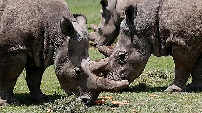Kenya : la mort d'un neuvième rhinocéros noir crée la polémique