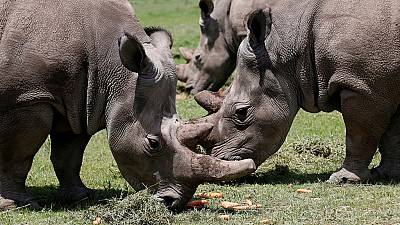 Kenya's Ministry of Tourism wants independent probe following death of 9th black rhino.