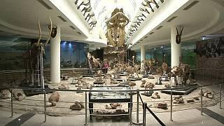 Extinct animals live on at Cairo zoological museum [No Comment]