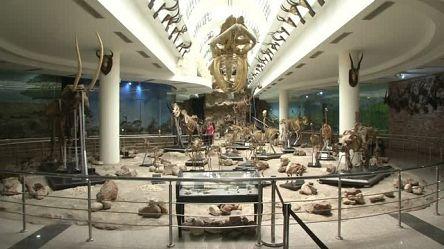Des animaux disparus se trouvent au musée zoologique du Caire [No Comment]