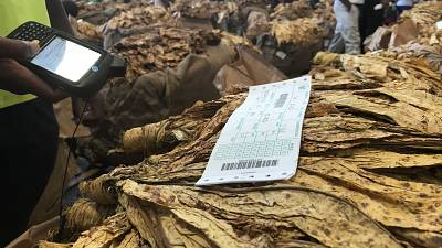 Zimbabwe tobacco output at all-time high, defying years of economic gloom
