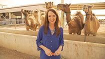 How are camel milk products being consumed worldwide?