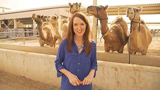 Inspire Middle East : le camelccino, vous connaissez ?