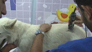 Égypte: manucure, pédicure mobile pour les animaux de compagnie