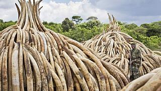 Kenya: alleged ivory trafficker acquitted on appeal