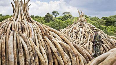 Kenya : acquittement d'un trafiquant d'ivoire présumé